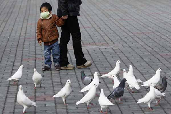 China bird flu death toll rises to 22