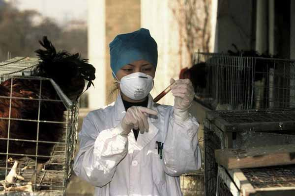 "New bird flu poses ""serious threat"" as death toll rises"