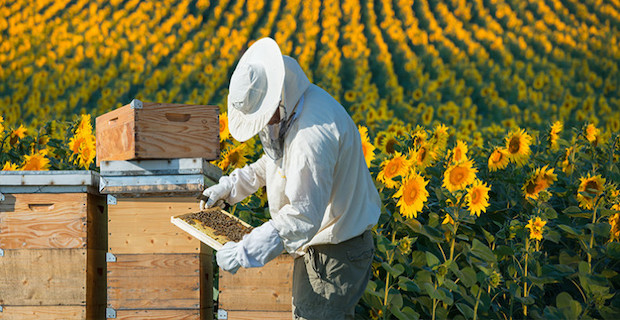 Turkey world's second largest beekeeping country