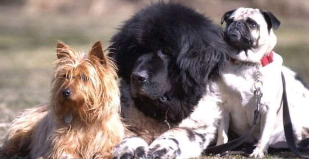 French mayor issues ban on 'excessive dog barking'