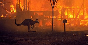 Wildlife loss in Australia much bigger...