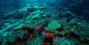 Old shipwreck found in Mediterranean